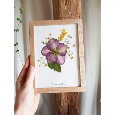 Herbier de fleurs séchées - Hellébore Les herbiers
